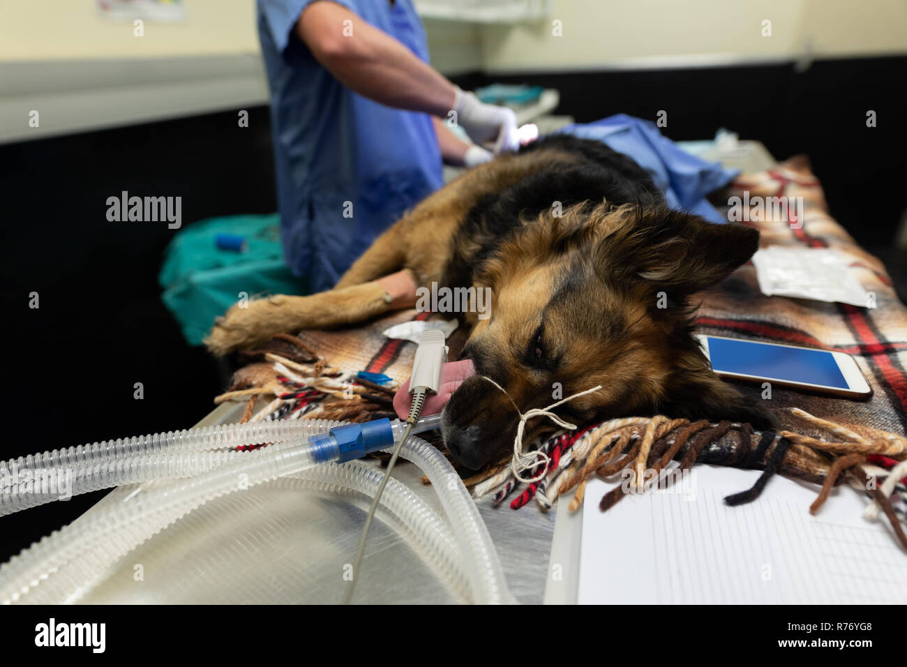 Surgeon operating a dog in operation theatre - Stock Image