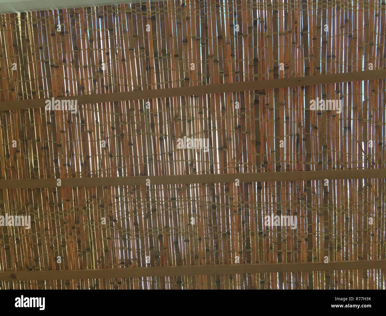 Thatch of Succah - Stock Image