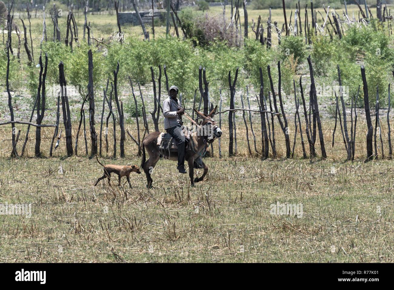 farmer riding on donkey on the bank of thamalakane, okavango river in the north of maun, botswana - Stock Image