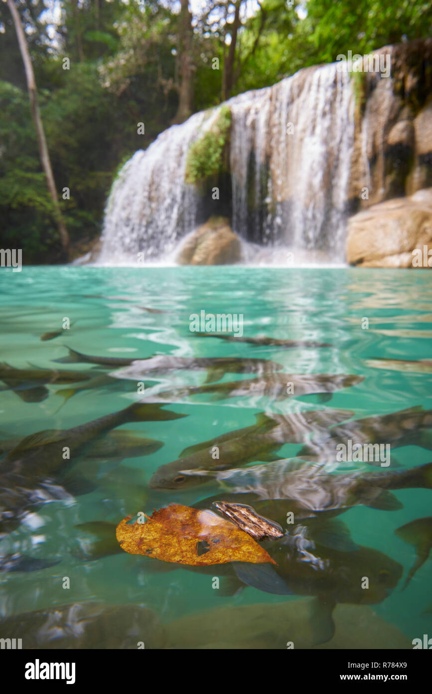 Wang Matcha, the second tier of Erawan Waterfall in Kanchanaburi Province, Thailand, with fish swiming in the clear water. Stock Photo