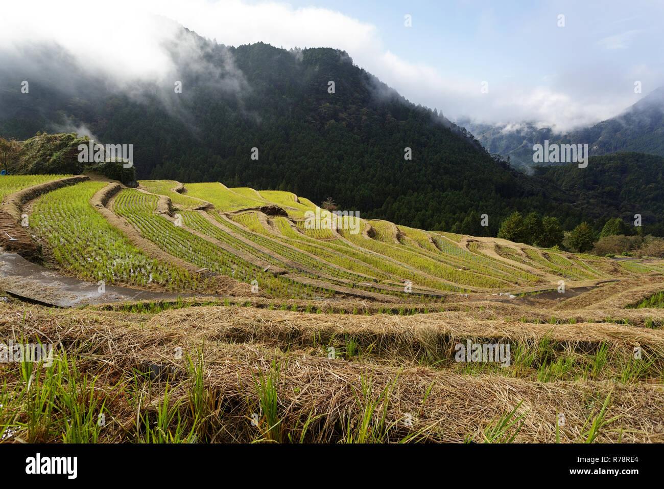 Maruyama Senmaida rice terraces in central Japan, Maruyama-senmaida, Kumano, Japan Stock Photo