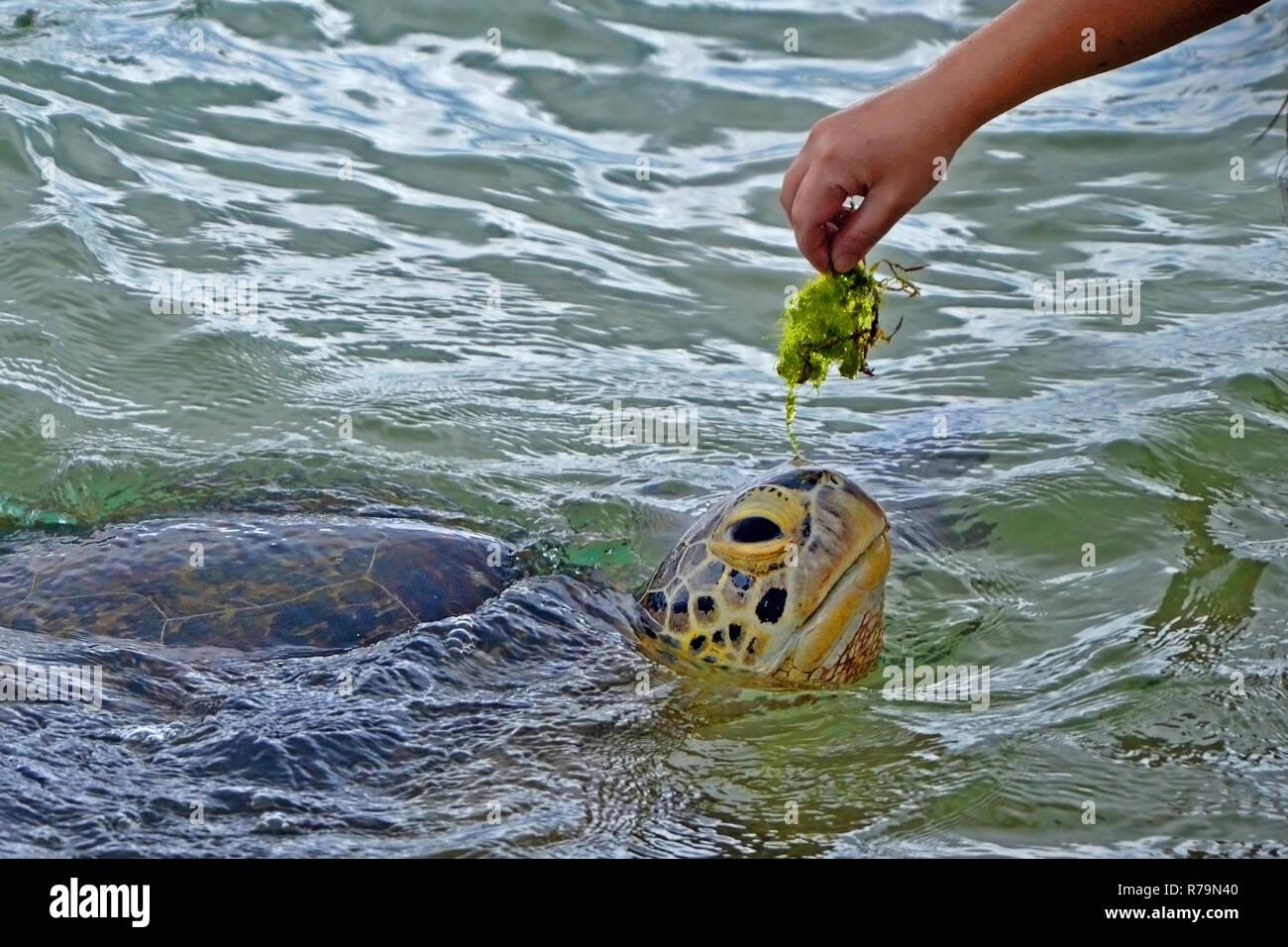 Feeds On Algae Stock Photos & Feeds On Algae Stock Images