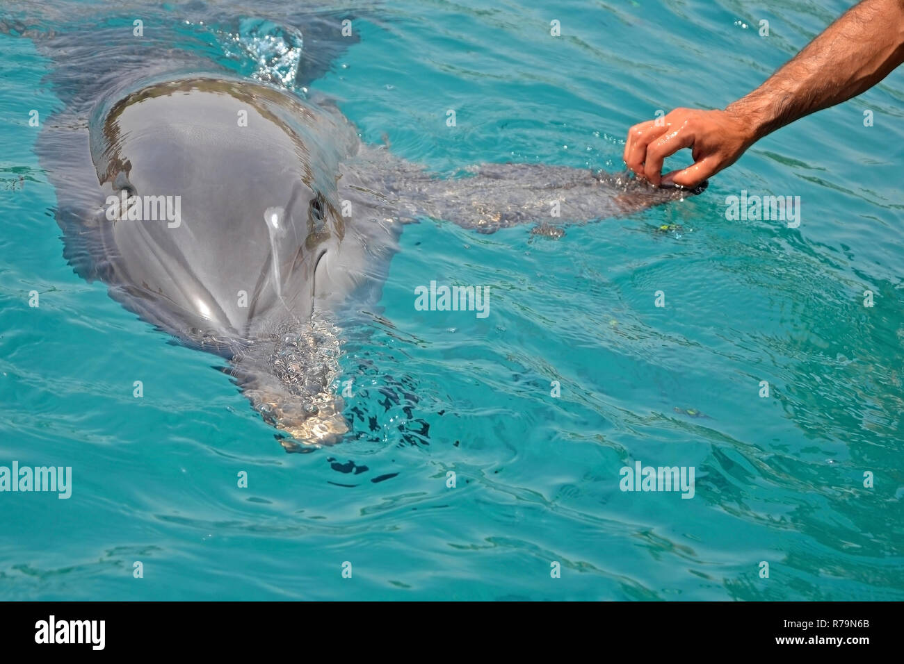 Dolphin research project u1