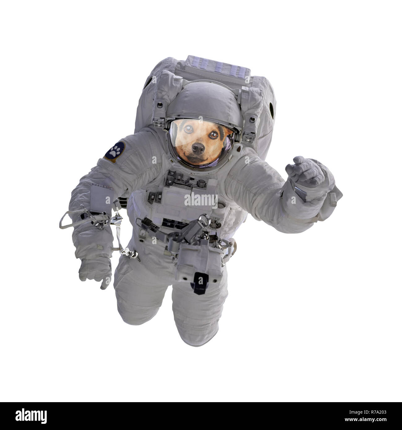 Dog as astronaut or spaceman isolated - Stock Image