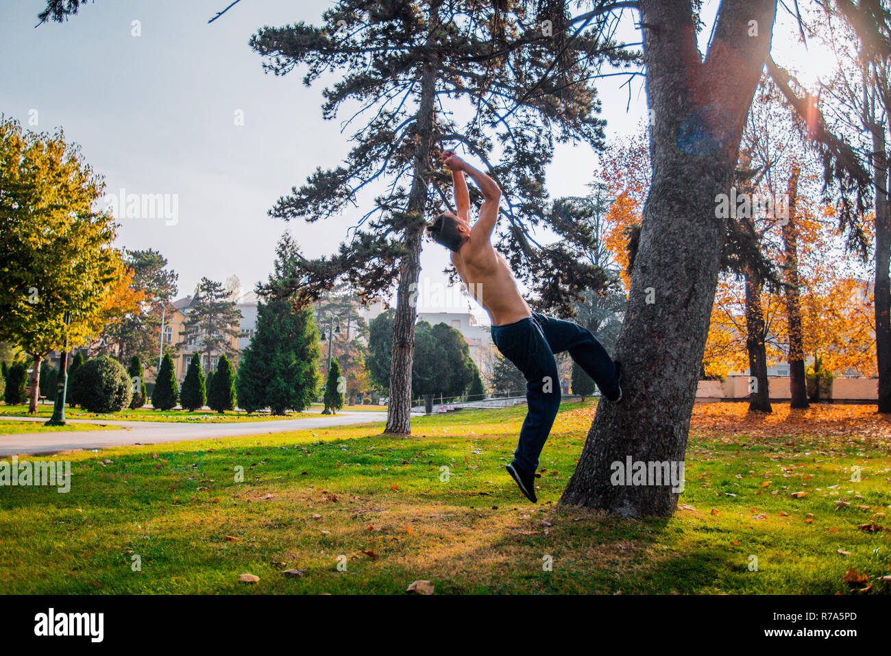 Shirtless traceur practicing parkour exercise while climbing on a tree - Stock Image