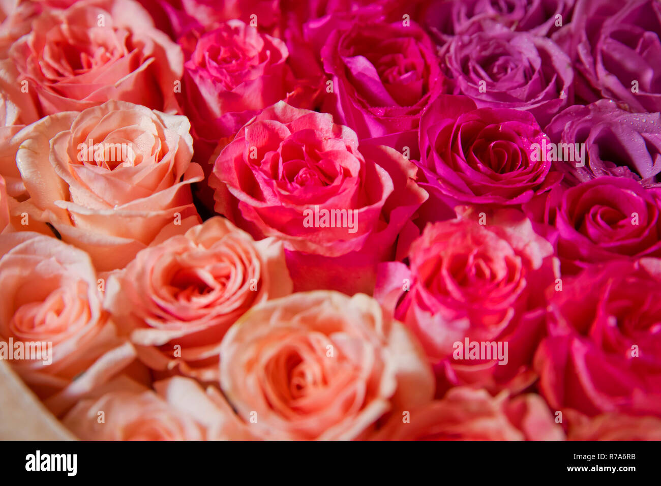Red Natural Roses Background Red Rose Background Natural Horizontal Pattern Flower Wall Close Up Of Huge Bouquet Stock Photo Alamy