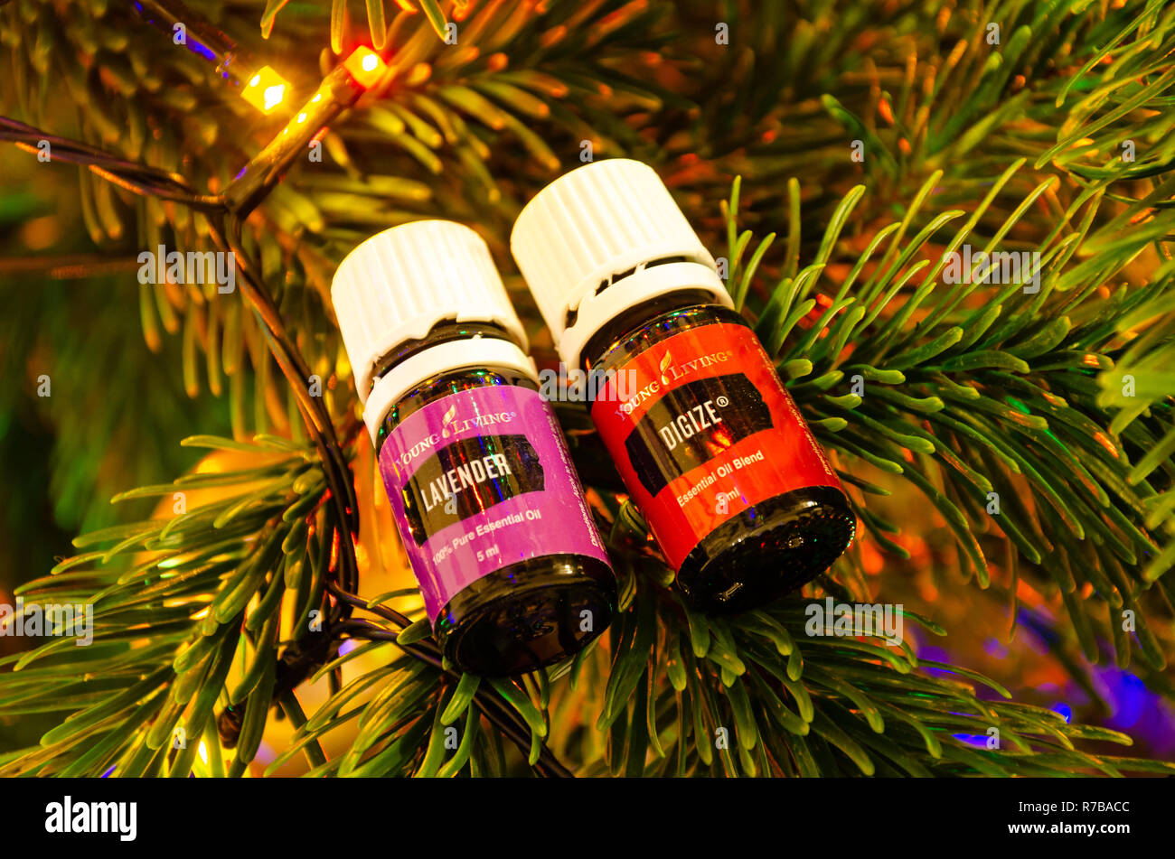 Young Living Christmas Tree.Young Living Essential Oils Pictured Balanced On The Branch