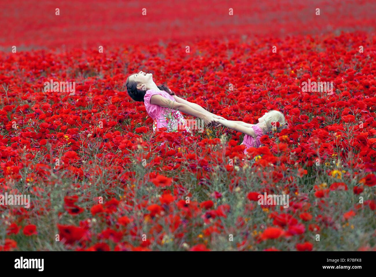 young  girls at the poppies field - Stock Image