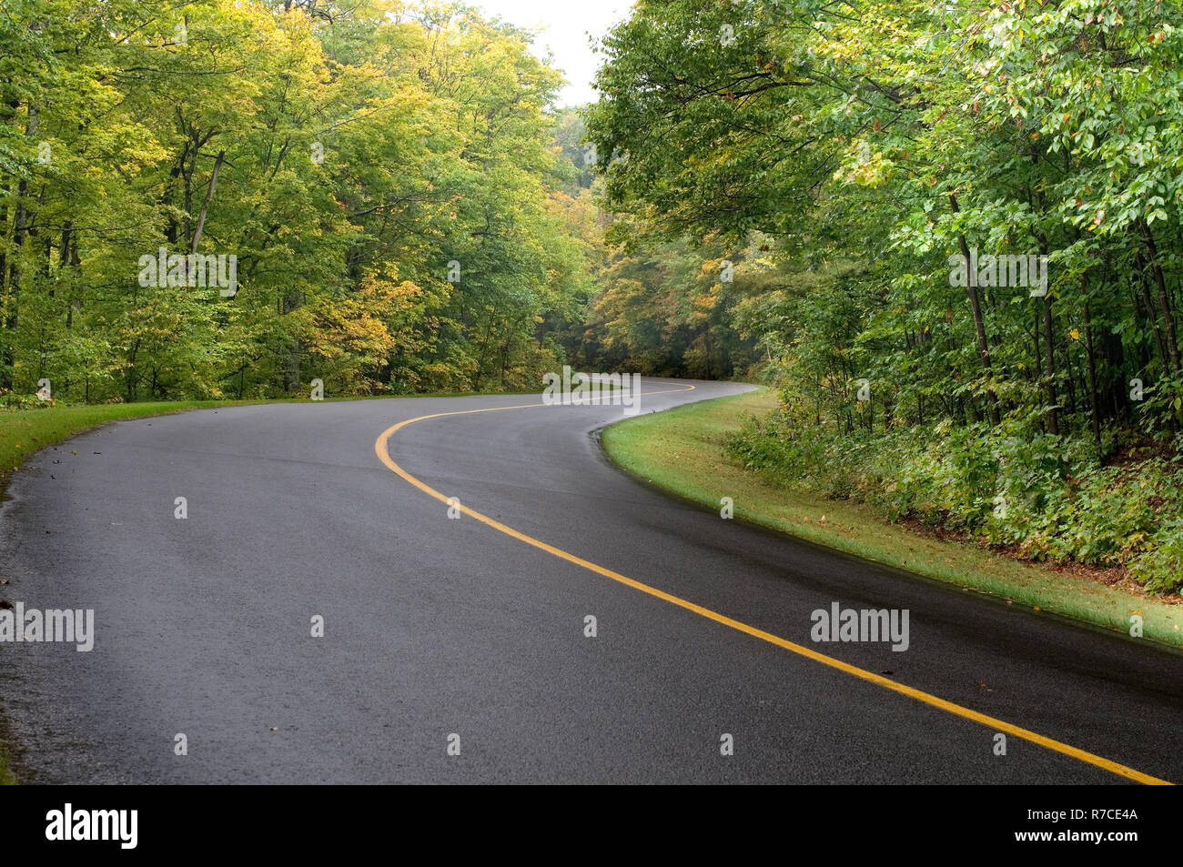 Curved Road in the Gatineau Park in Quebec Canada - Stock Image