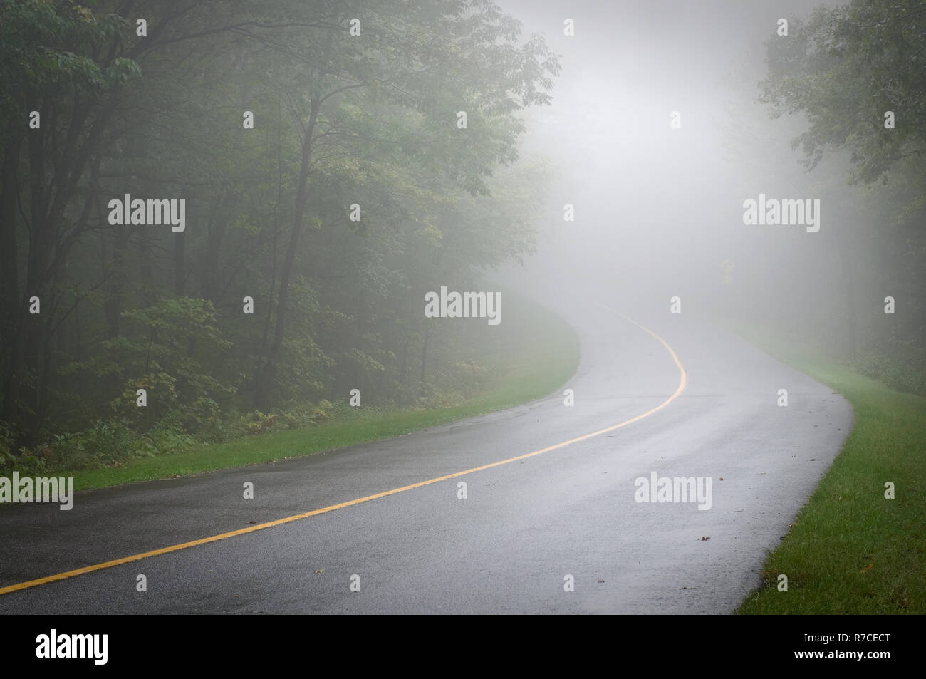 Curved Road in a Green Summer Forest with Fog - Stock Image