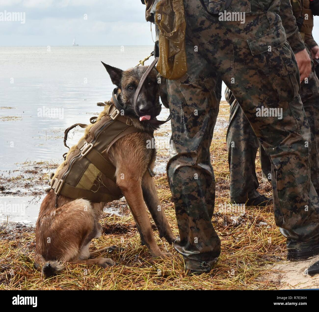 Navy Marines Marsoc K 9 Canine Special Forces Key West