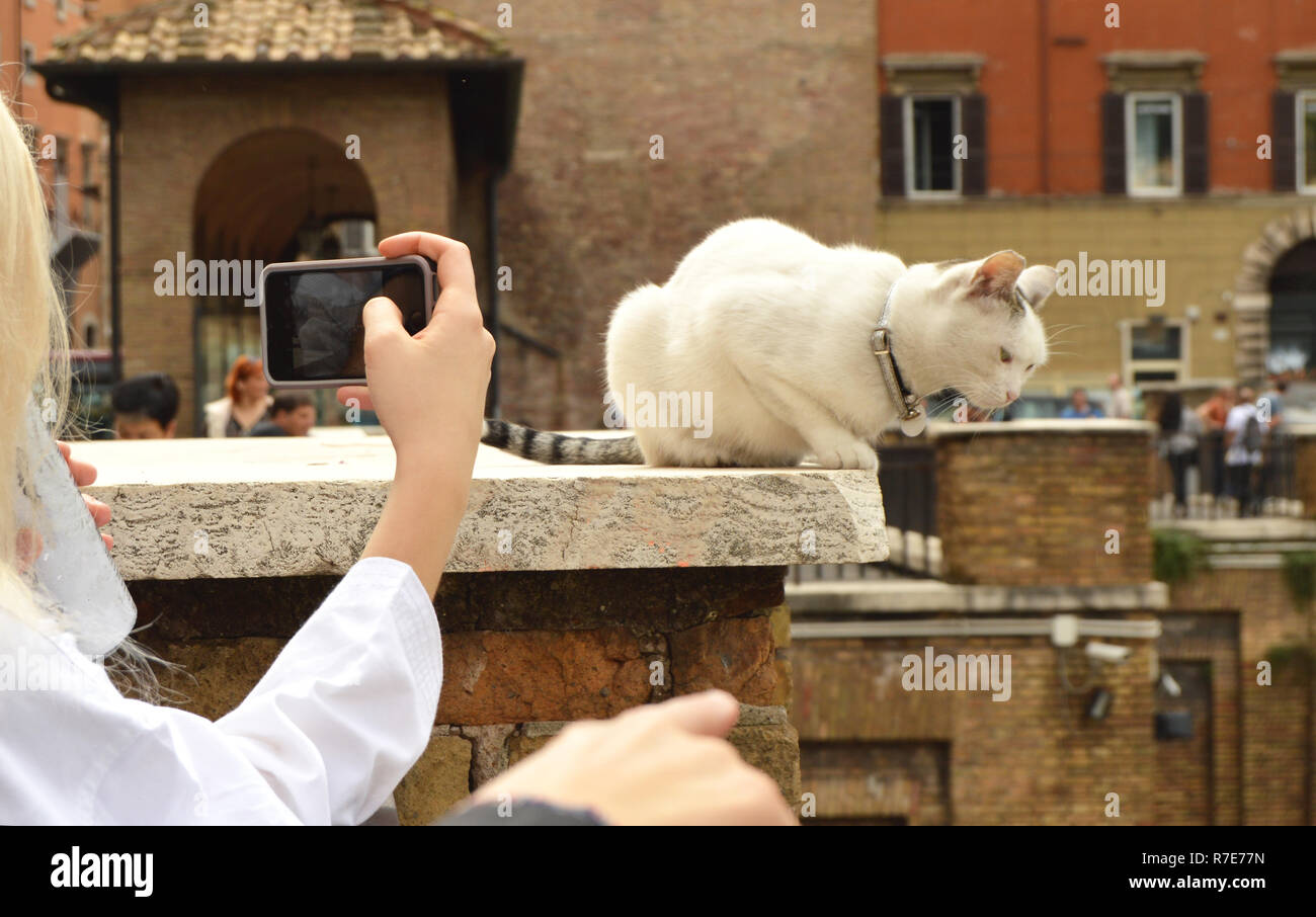 Rome, Italy-October 07, 2018: girl taking pictures on her smartphone cute white cat sitting on the Plaza Largo Di Torre Argentina - Stock Image