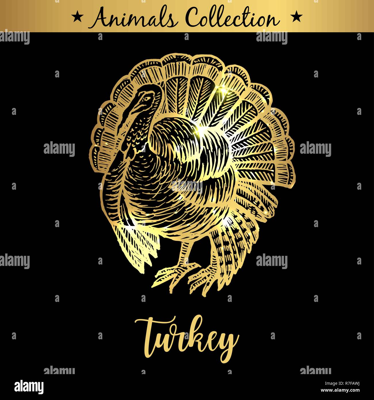 Golden and royal Hand Drawn Emblem of farm Turkey animal. Butchery shop branding, dietary meat products. Butcher market. Gold Outline Sketch and lettering. Contour drawing concept - Stock Vector