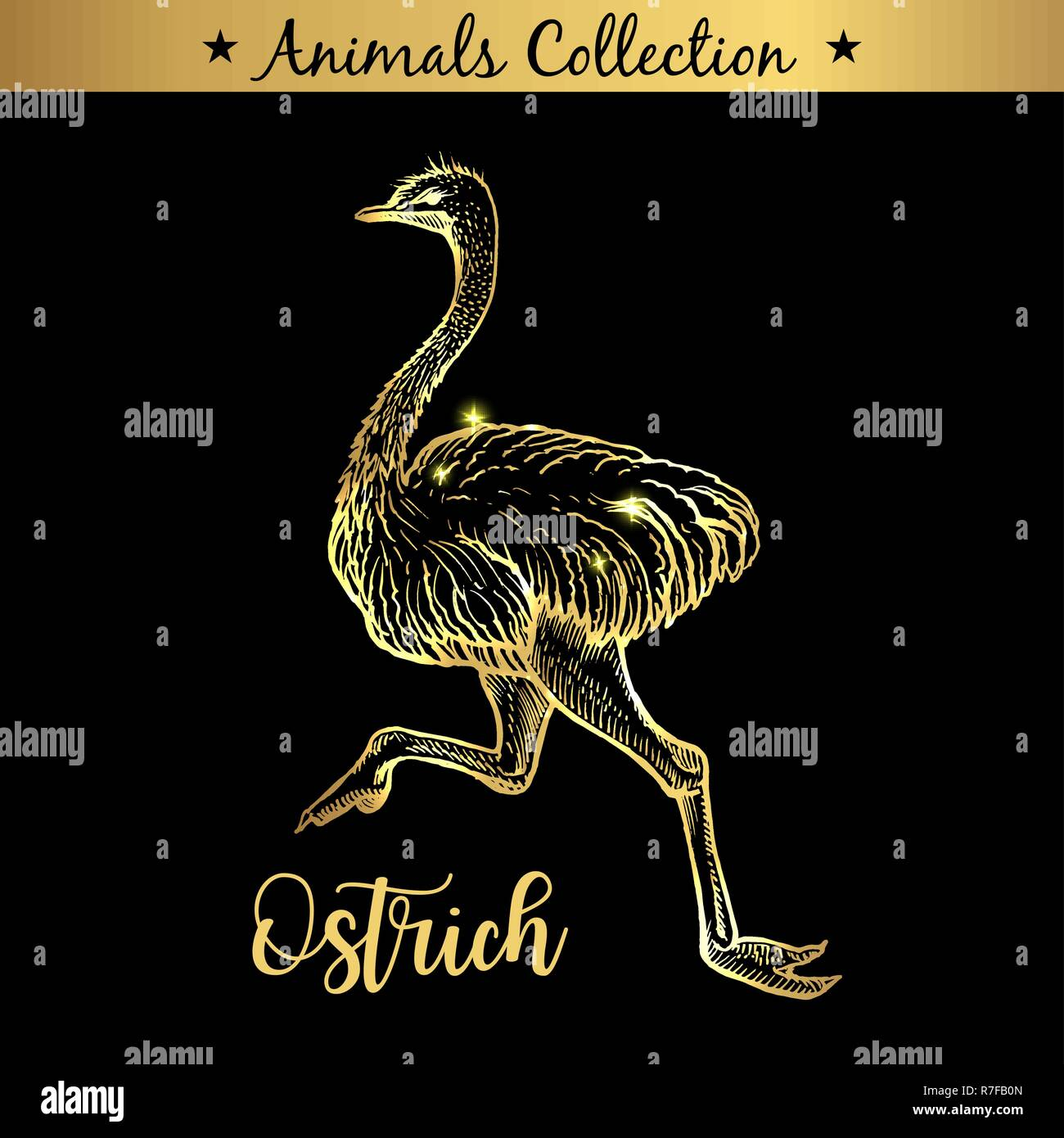 Golden and royal Hand Drawn Emblem of farm Ostrich Bird animal. Butchery shop branding, meat products. Butcher market. Gold Outline Sketch and lettering. Contour drawing concept - Stock Vector