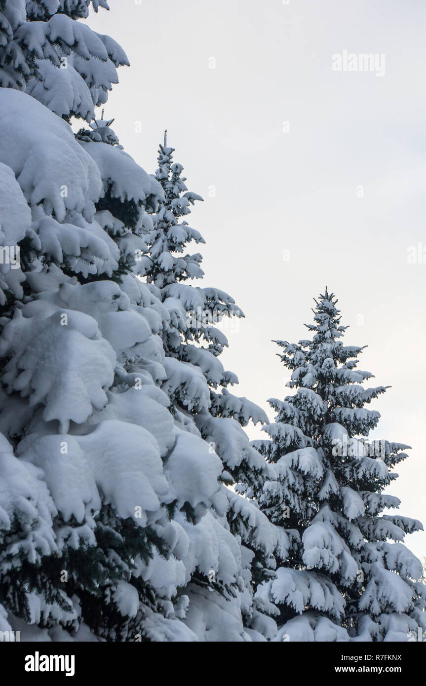 Green Fluffy Fir Tree In The Snow Christmas Wallpaper