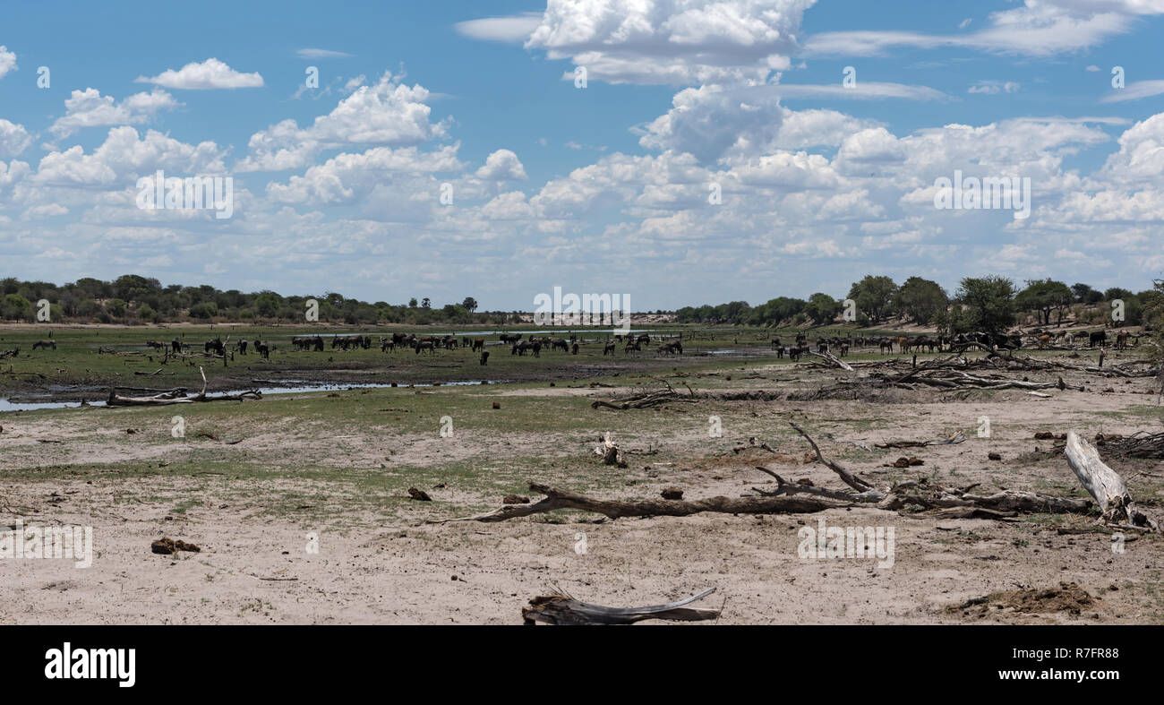 Landscape at Boteti River, Makgadikgadi National Park, Botswana, Africa - Stock Image
