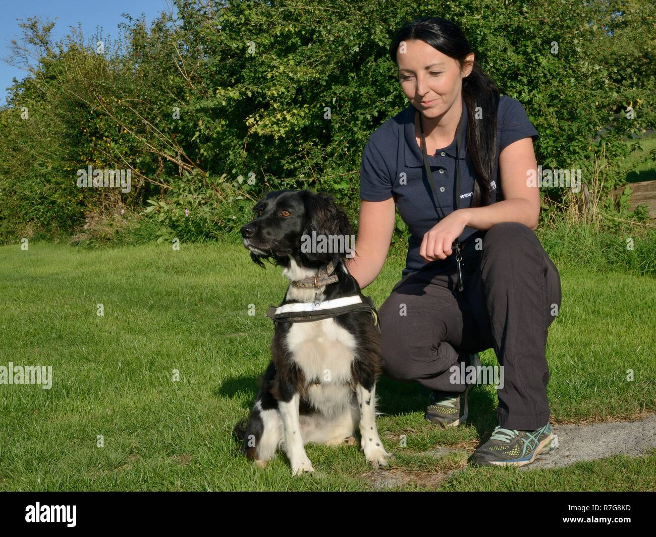 Nikki Glover of Wessex Water with sniffer dog Freya poised to seek Great crested newts (Triturus cristatus) during a training exercise, Somerset, UK. - Stock Image