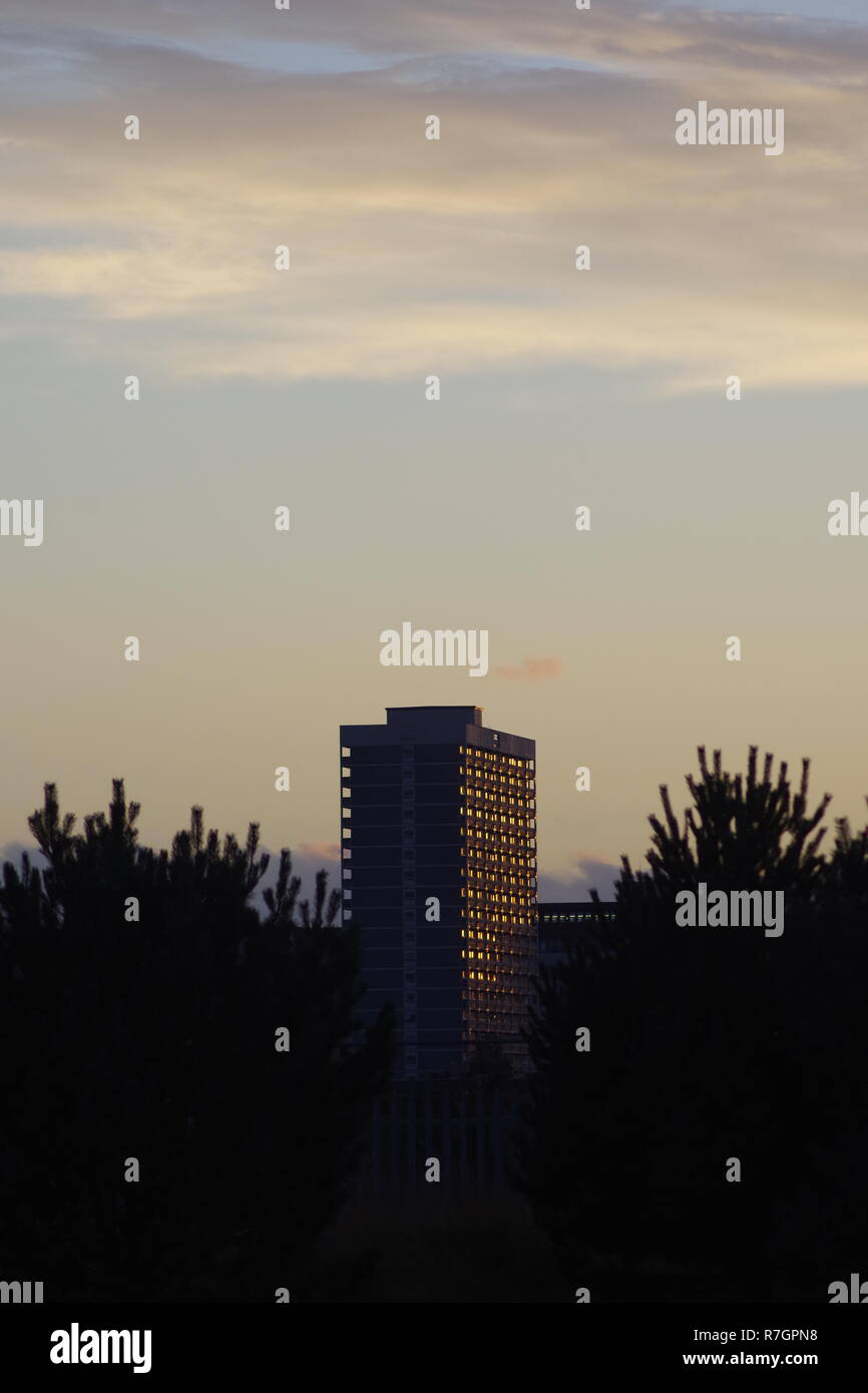 Concrete Tower Block of Flats beyond Silhouetted Norway Spruce Tree at Sunset. Scotland, UK. - Stock Image