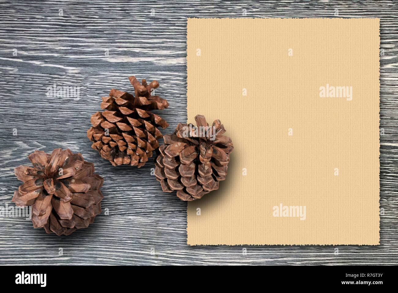 Christmas greeting card template with three cedar cones against grey wooden board and empty vintage sheet of paper for your text Stock Photo