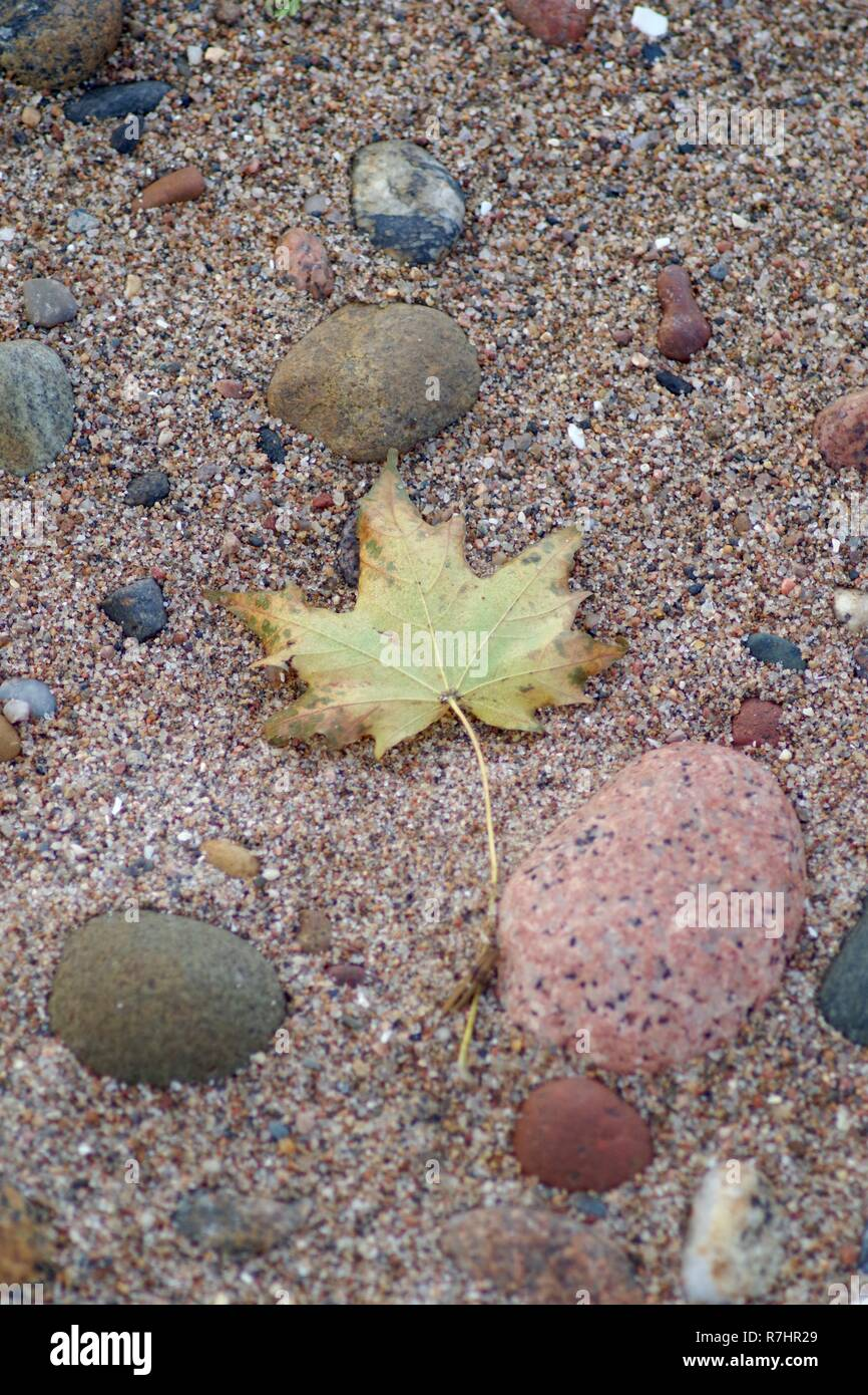 Up-turned Autumn Leaf on Aberdeen Beach with Rounded Pebbles. . Intimate Landscape. Scotland, UK. - Stock Image