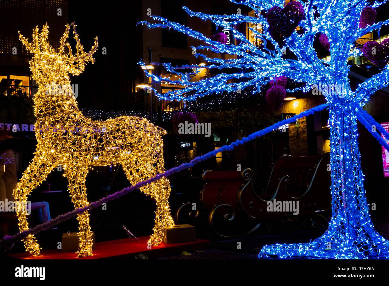 christmas deer noel bring santa on his sleigh with four reindeer