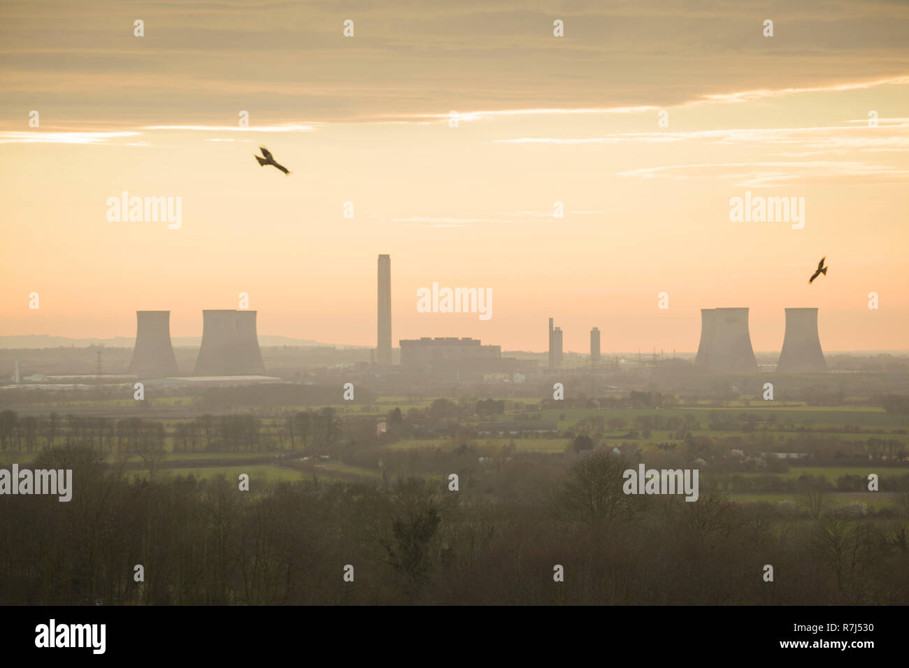 Red kites soar over Wittenham Clumps, Oxfordshire,  with Didcot Power Station behind, photographed just before the South cooling towers were demolishe - Stock Image