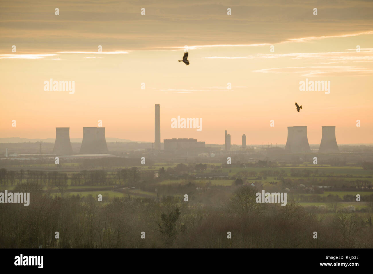 Red kites soar over Wittenham Clumps, Oxfordshire, with Didcot Power Station behind, photographed just before the South cooling towers were demolished - Stock Image