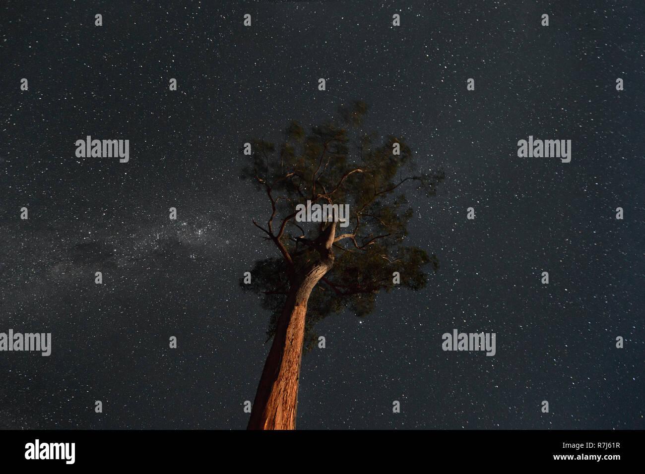 Star light on clear night around illuminated forest tree. - Stock Image