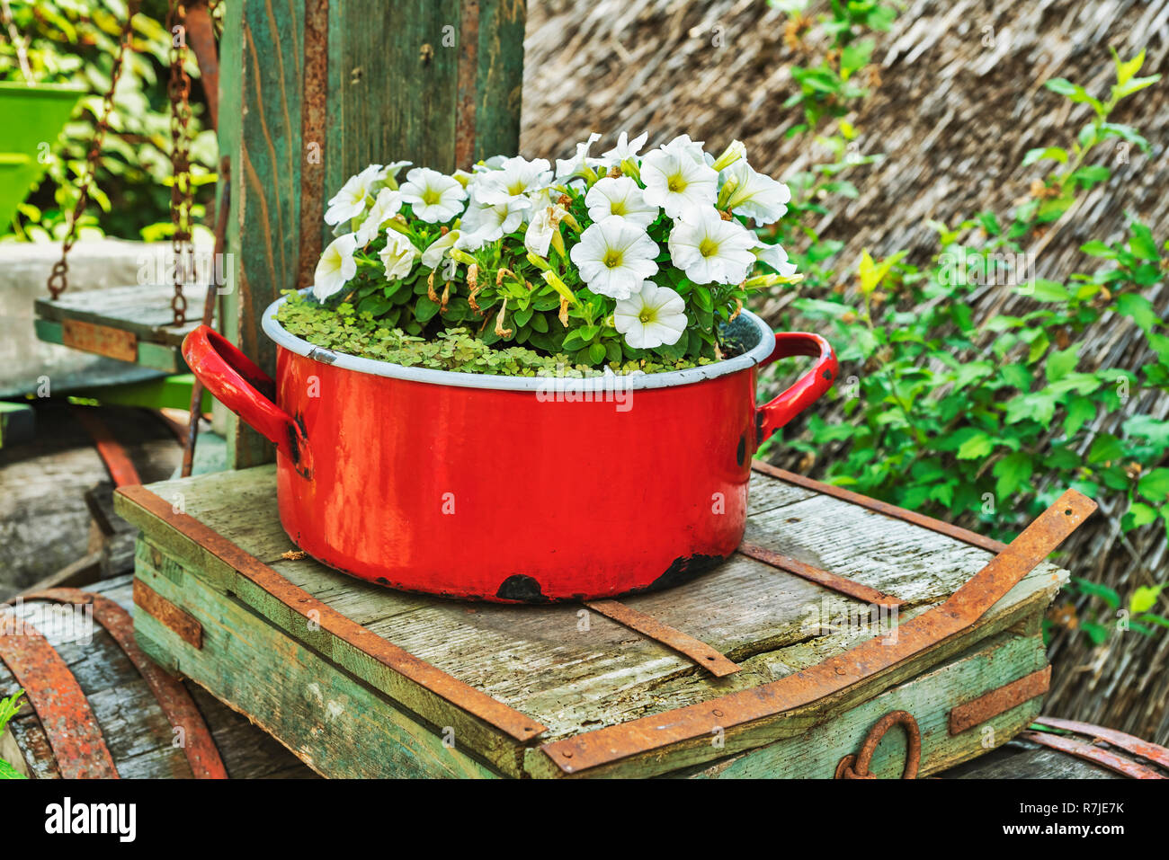 White petunias are planted in a red saucepan. The saucepan stands on an old scale, Tihany, Veszprem county, Central Transdanubia, Hungary, Europe - Stock Image