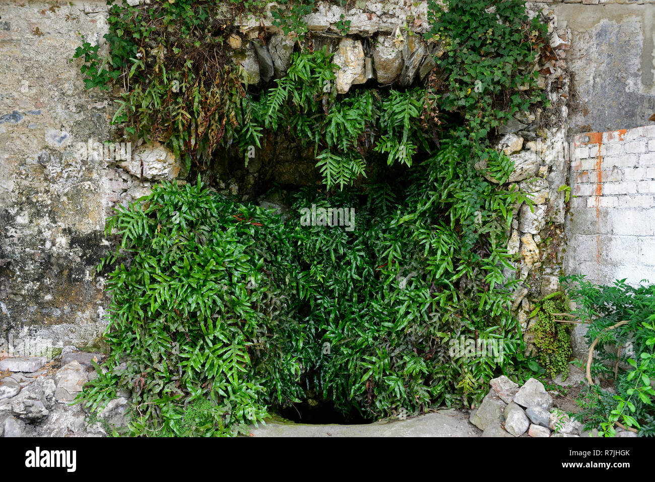 victorian fernery,ferns,damp,water,sunken feature,Beaulieu House,drogheda,louth,RM Floral Stock Photo