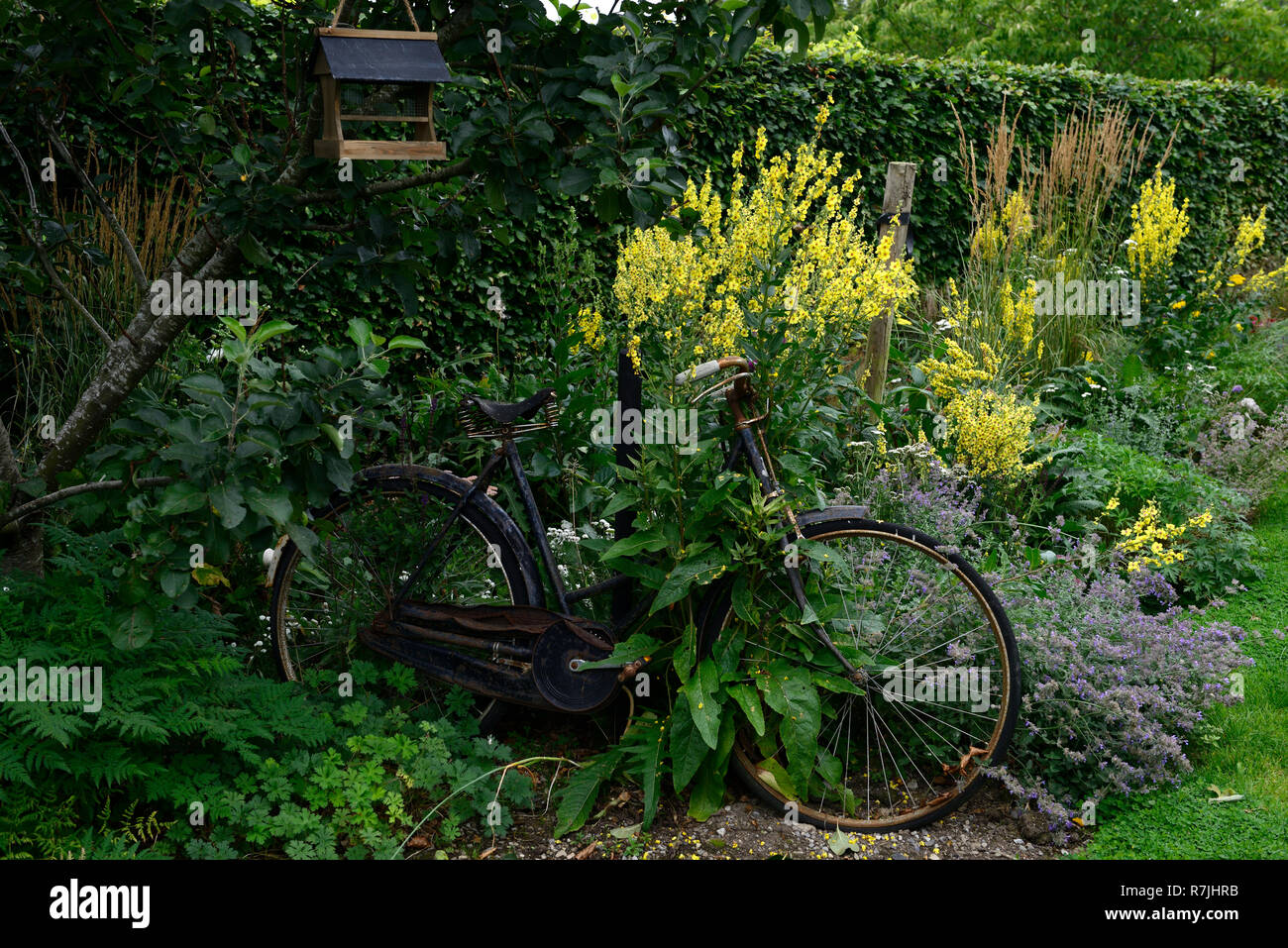 Old Bicycle High Nelly Cycle Bike Bikes Garden Gardens Design