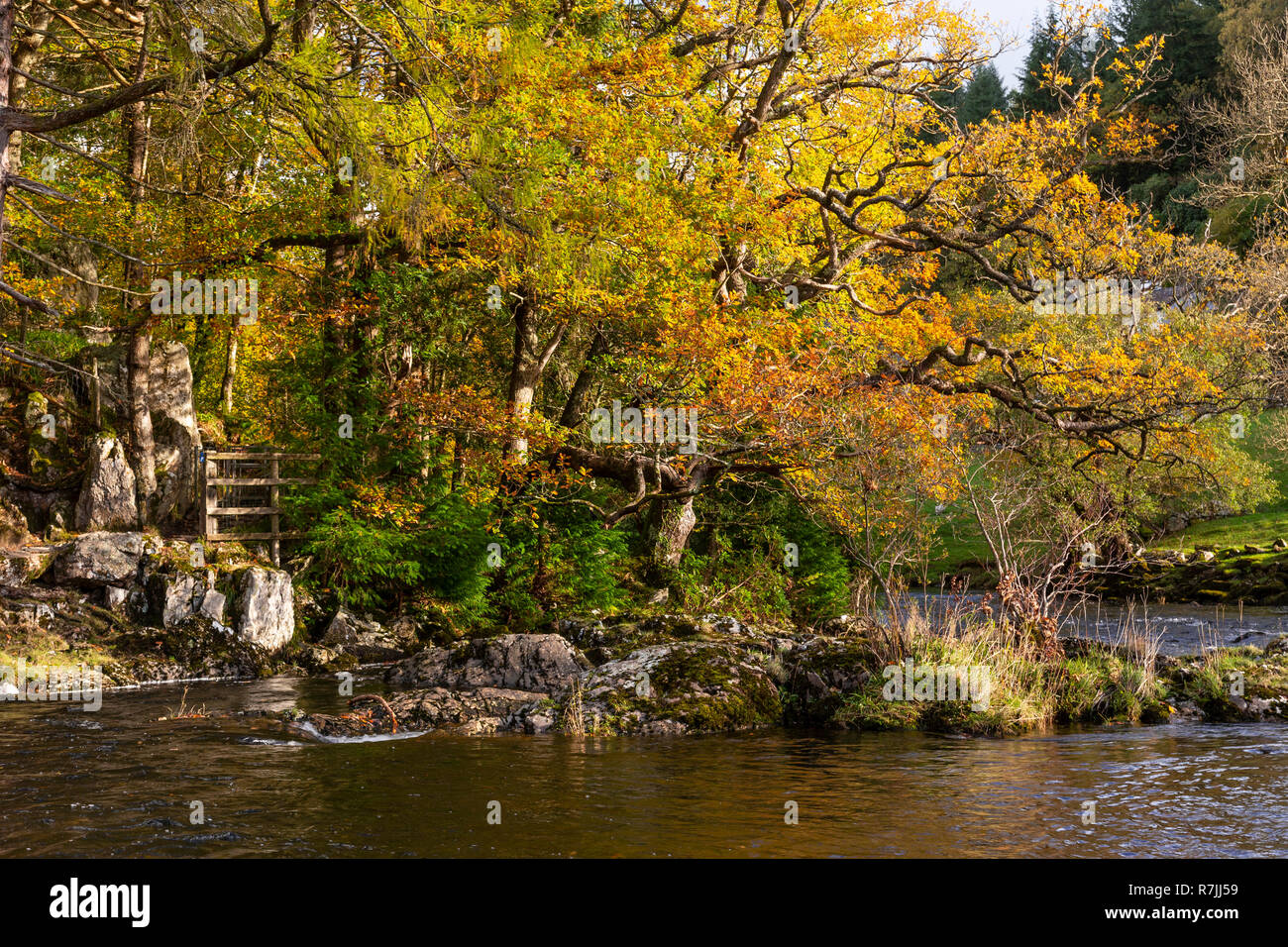 Trees and river in autumn at Betws-y-Coed, Snowdonia, North Wales Stock Photo