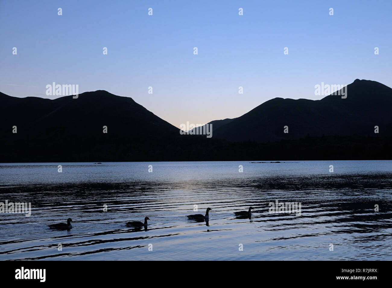A tranquil scene at twilight showing waterfowl swimming along Derwentwater against a backdrop of Catbells and Causey Pike, Lake District, Cumbria, UK - Stock Image