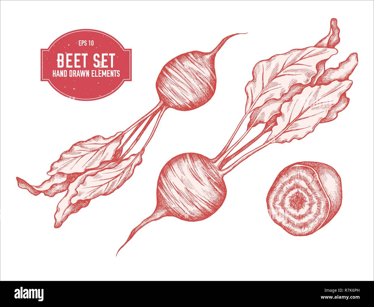 Beetroot Cut Cut Stock Vector Images Alamy