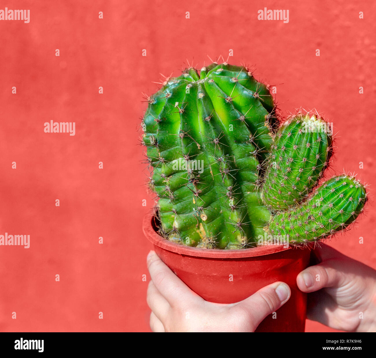 LIVING CORAL 2019. background with cactus. Living coral. Color of the year 2019. - Stock Image