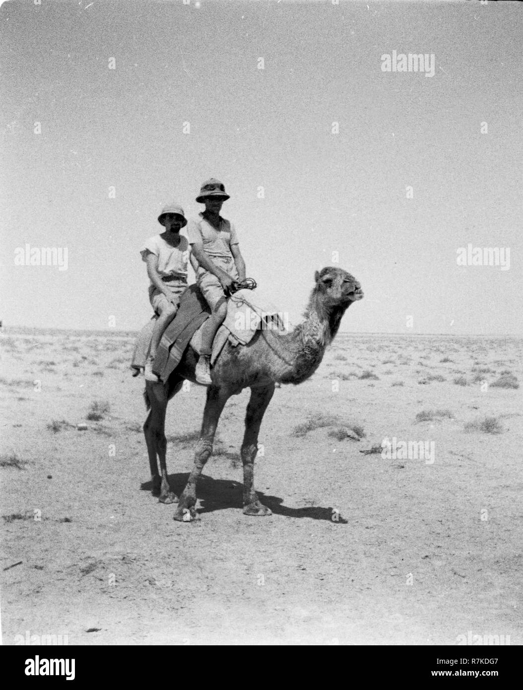 WW2 German Luftwaffe Soldiers riding a camel in North Africa - Stock Image