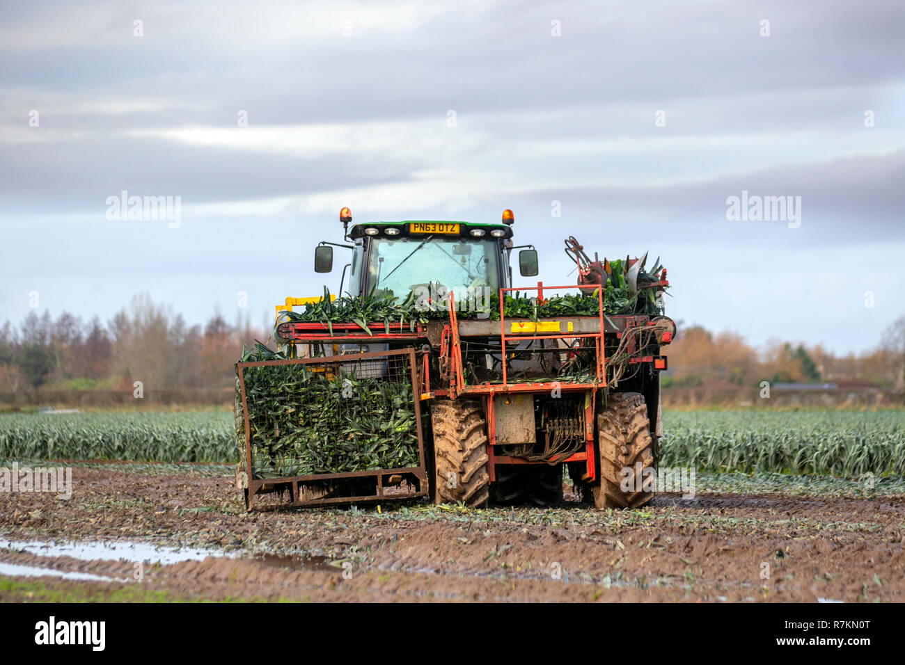 Burscough, Lancashire. 10th Dec 2018. UK Weather: Mechanical harvesting leeks on sodden fields. During spells of wet weather or in damp conditions, leek rust may attack the crops. Leek producers are now struggling to make ends meet according as the cold spring and record dry summer take their toll on a category that is already losing market share. Leeks are tolerant of cold, so harvest is delayed until after the first frosts. According to the British Growers Association  yields are already down 23 per cent. Credit: MediaWorldImages/AlamyLiveNews Stock Photo
