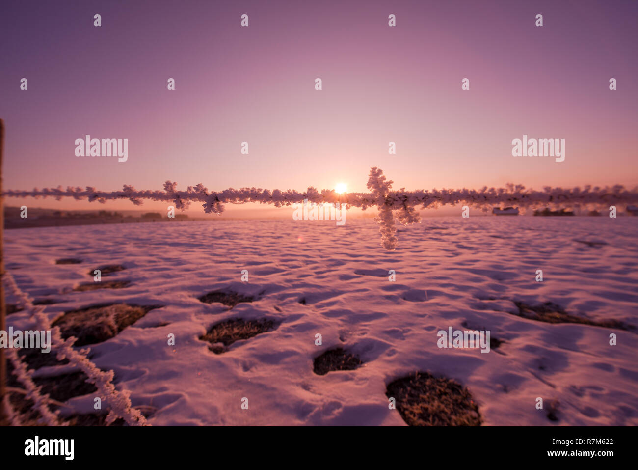 barbed wire fence in beatiful winter morning sunrise with frost and fresh snow representing imigration and security problem Stock Photo