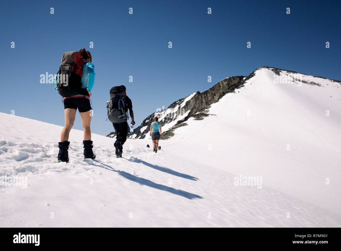 Norway, Oppland, Vaga, Jotunheimen National Park, trekkers climbing Galdhopiggen, the tallest mountain in Norway and Scandinavia at 2469m Stock Photo