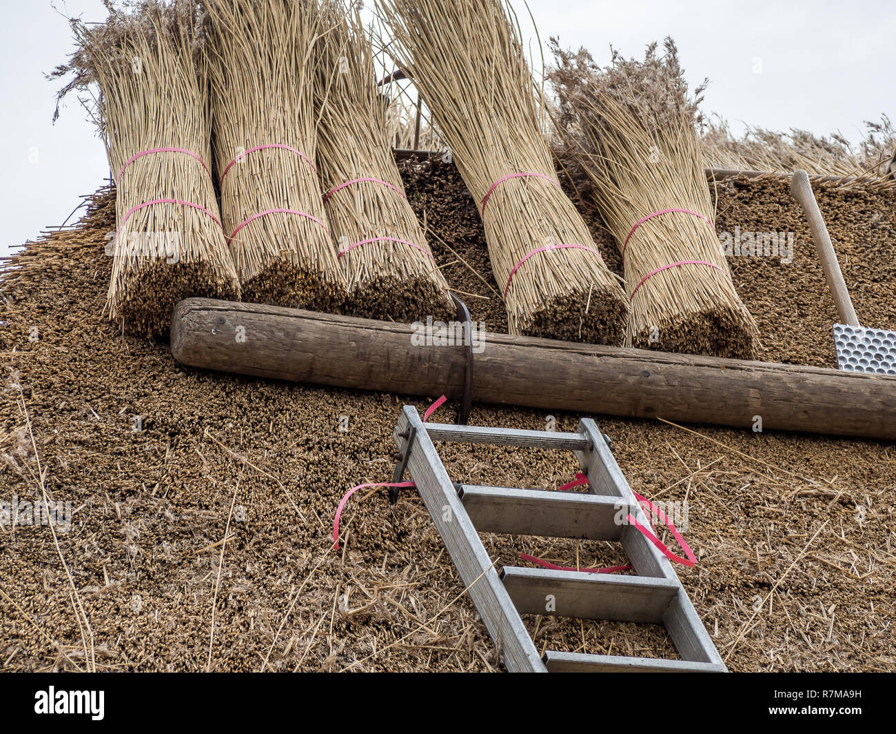 New thatched roof construction work - Stock Image