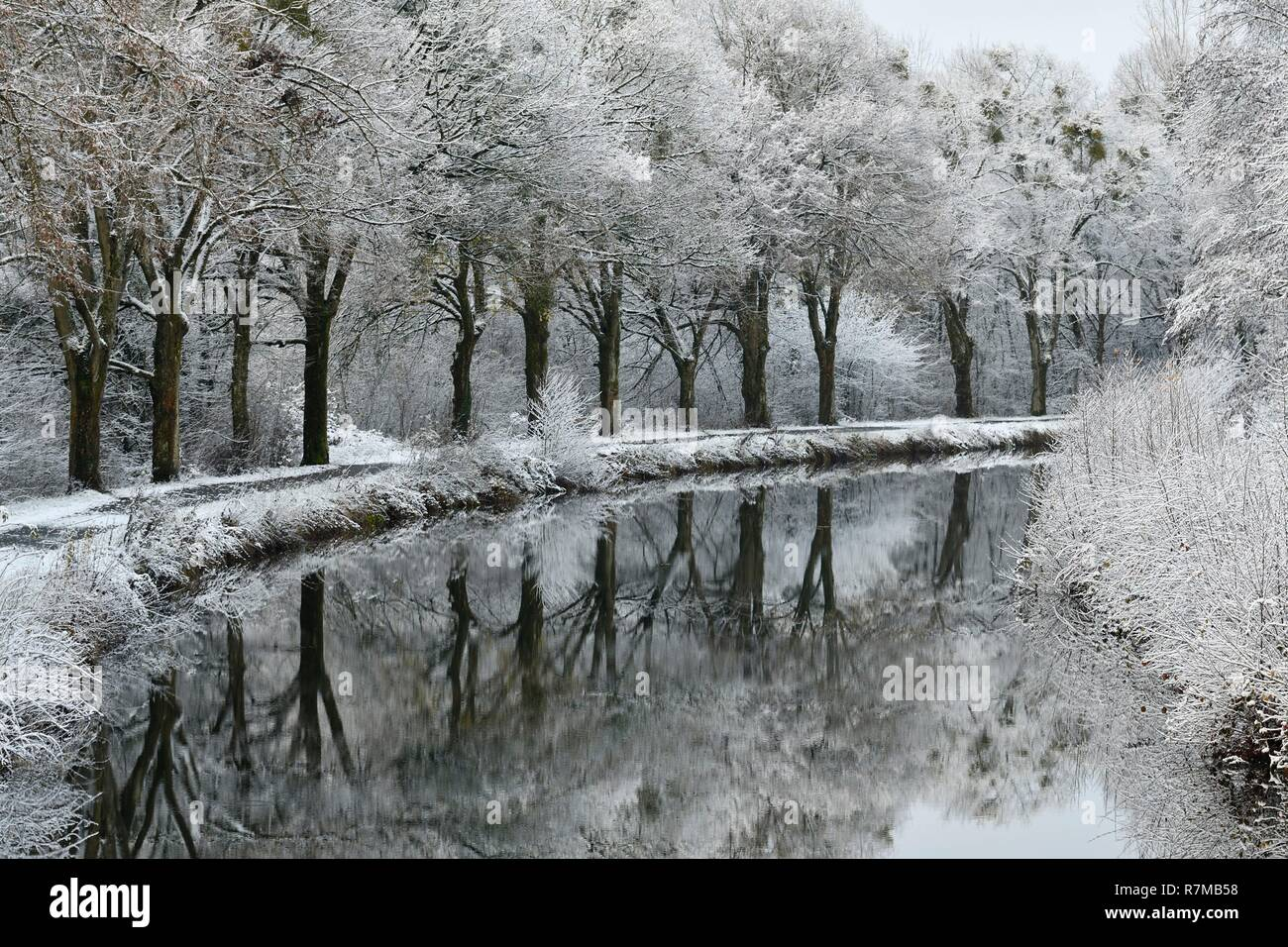 France, Doubs, Brognard, channel of Haut Saone in winter under the snow, hauling landscaped in green casting - Stock Image