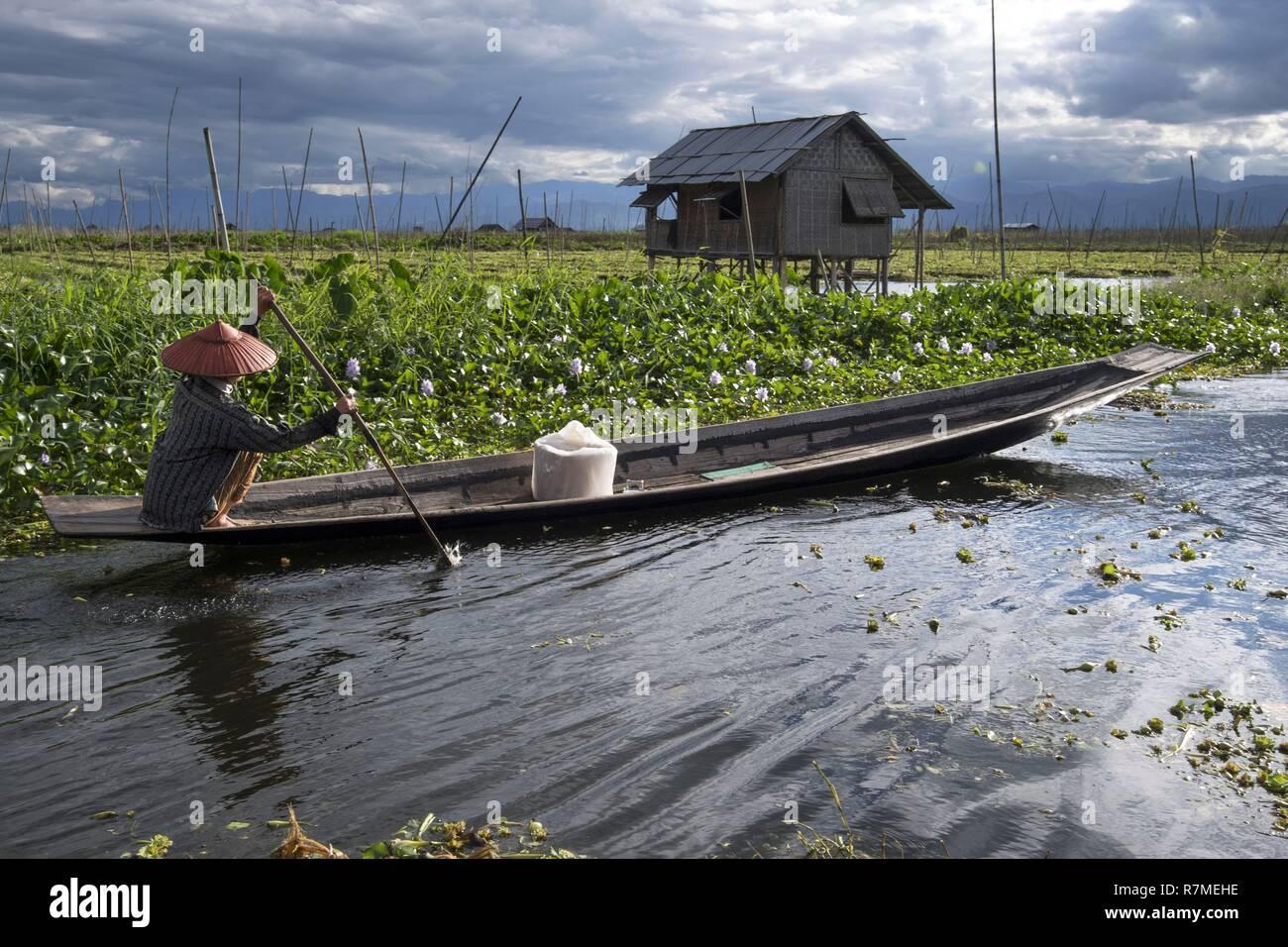 Myanmar, Shan State, Taunggyi District, Inle Lake, floating gardens Stock Photo