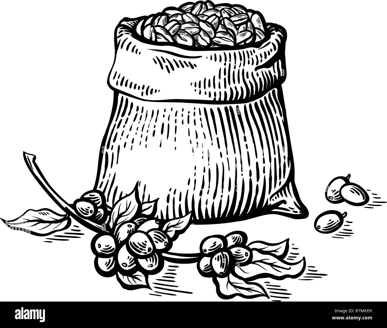 coffee beans in full bag in graphic style vector illustration - Stock Image