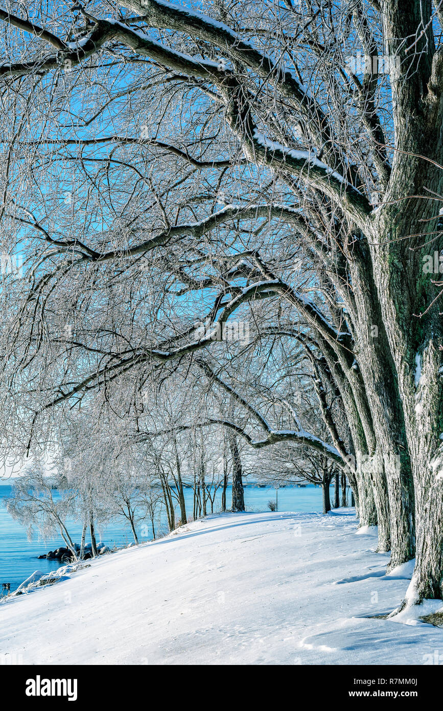Tree branches covered with shield of ice in a winter morning by Lake Ontario caused by temperature plunging after a rainy night. Stock Photo