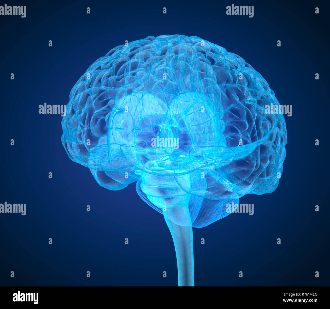 Human brain X-ray scan , Medically accurate 3D illustration - Stock Image
