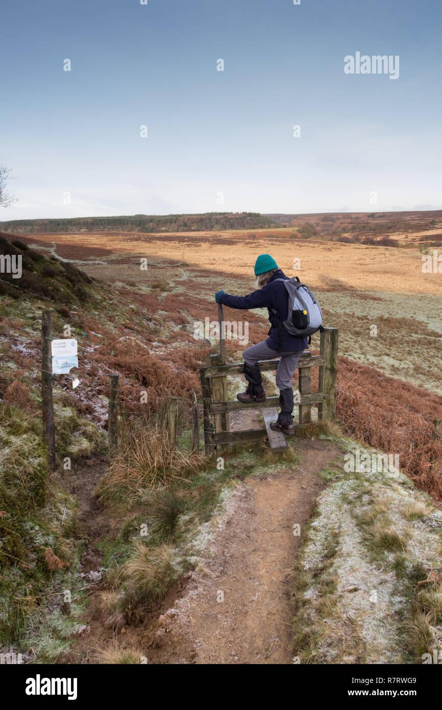 A female walker on Levisham Moor in the North York Moors Stock Photo