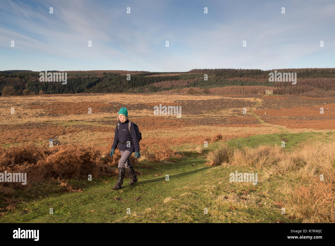 A female walker on Levisham Moor in the North York Moors - Stock Image