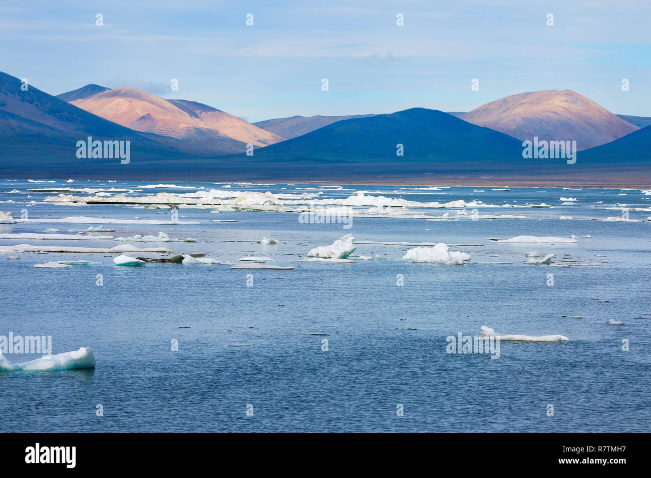 Ice floes off Wrangel Island, a UNESCO World Heritage Site, Wrangel Island, Far Eastern Federal District, Russia - Stock Image