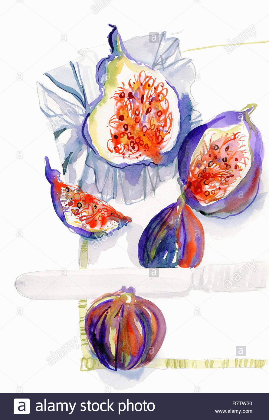Watercolor painting of whole and halved fresh figs Stock Photo