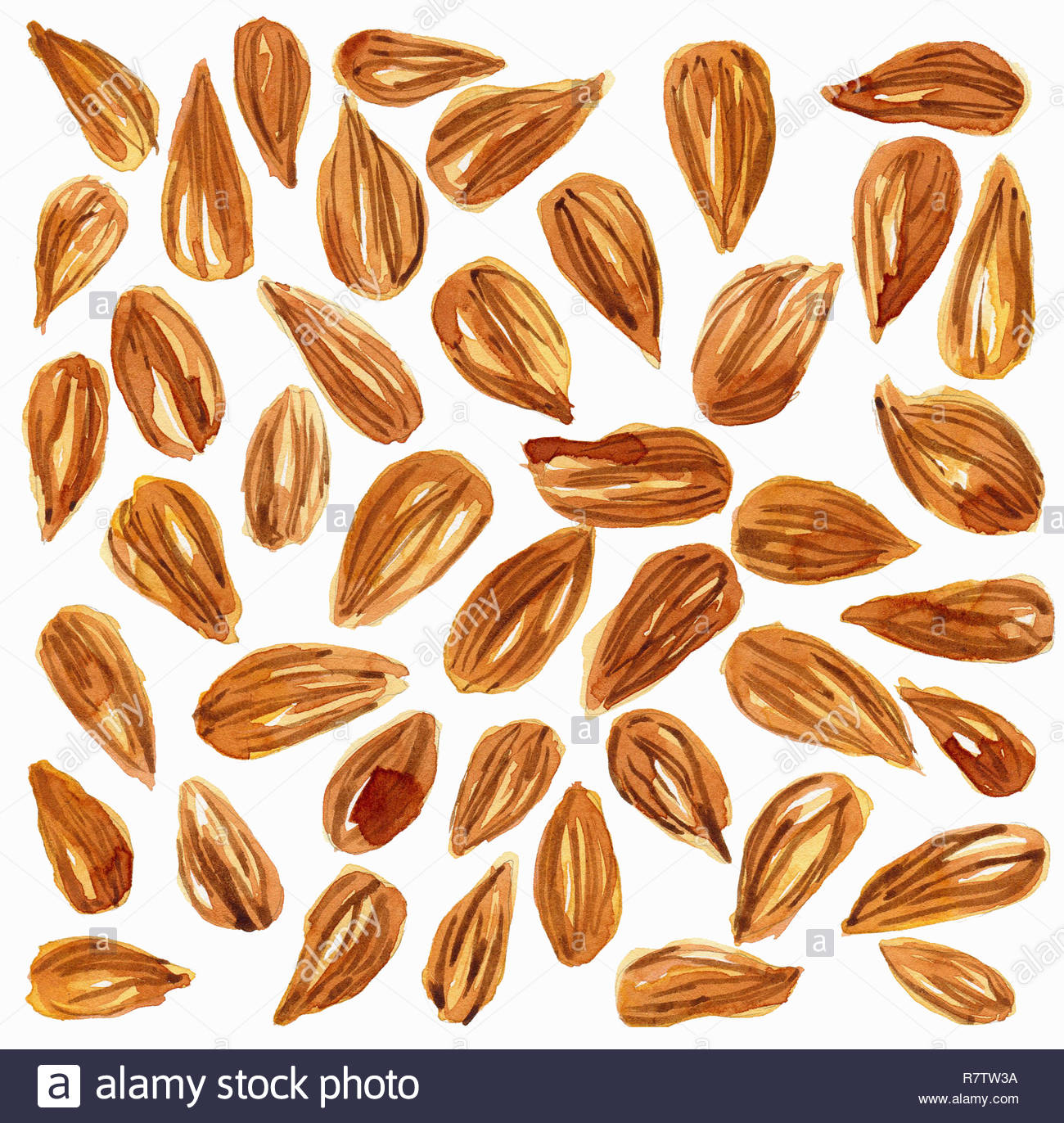 Watercolor painting of almonds Stock Photo